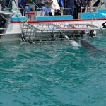 Shark Cage Diving Cape Town 1